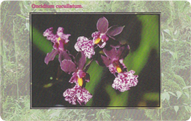 41-09-99-c288-orchidea-4.png